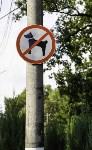 Рейд по выгулу собак в Центральном парке, Фото: 8