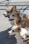 Фестиваль помощи животным в Центральном парке, Фото: 5