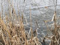 В пруду поселка Октябрьский в Туле из-за загрязнения гибнет рыба, Фото: 1