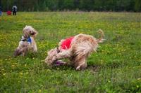 В Туле состоялись собачьи бега, Фото: 7