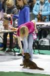 Выставка собак в Туле 14.04.19, Фото: 24