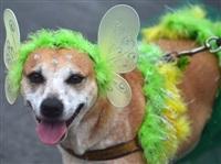 Собачий карнавал, Фото: 11