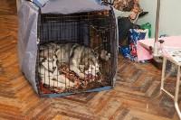 Выставка собак в Туле, 29.11.2015, Фото: 116