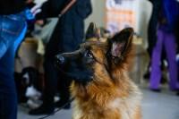 Выставка собак в Туле, Фото: 44