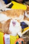 """Выставка """"Пряничные кошки"""". 15-16 августа 2015 года., Фото: 7"""