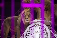 Шоу фонтанов «13 месяцев»: успей увидеть уникальную программу в Тульском цирке, Фото: 197