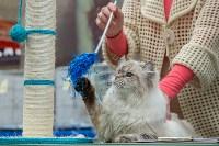 Выставка кошек в Туле, Фото: 17