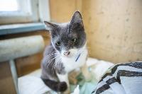 Волонтеры спасли кошек из адской квартиры, Фото: 57