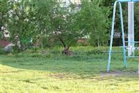Лось во дворе дома №45 по ул. Плеханова, Фото: 3