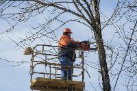 Кронирование деревьев в Туле: что можно, а чего нельзя?, Фото: 17