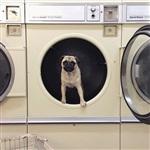 Фотогеничный пес Норм из Сиэтла, Фото: 8