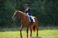 В Ясной поляне стартовал турнир по конному спорту, Фото: 61