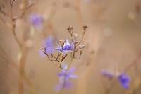 Золотая осень в Тульской области, Фото: 22