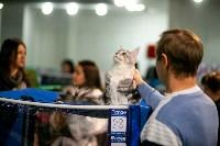 Пряничные кошки, Фото: 21