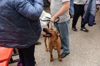 """Выставки собак в ДК """"Косогорец"""", Фото: 48"""