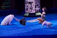 «Шоу Слонов» в Тульском цирке, Фото: 7
