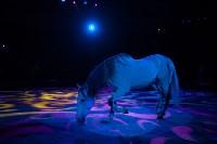 Туляков приглашают на новогоднее представление «Ёлка в цирке», Фото: 77