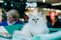 """Выставка """"Пряничные кошки"""" в ТРЦ """"Макси"""", Фото: 11"""