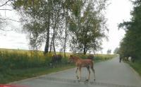 Табун лошадей у Сеженского леса, Фото: 5