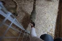 трогательный зоопарк, Фото: 32