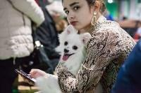 Выставка собак в Туле, Фото: 80