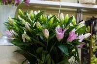 Ассортимент тульских цветочных магазинов. 28.02.2015, Фото: 45