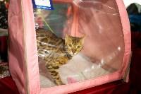 Пряничные кошки, Фото: 52