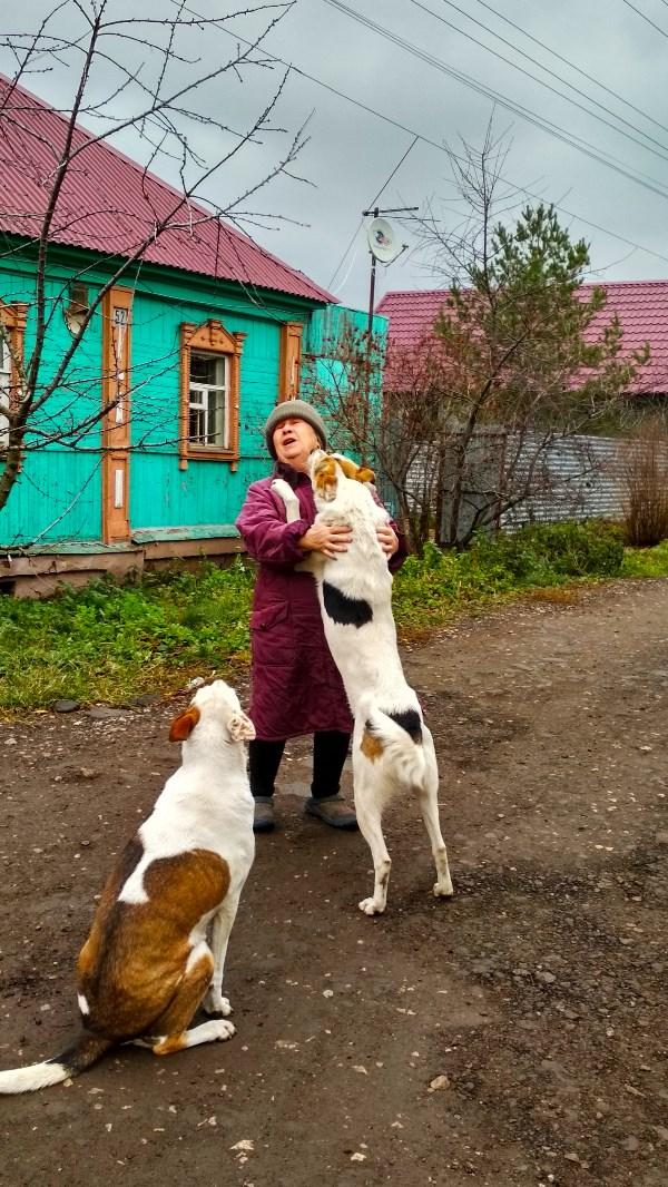 Через минуту после нападения все собакены были сыты. ps Ни одна бабушка при этом не пострадала