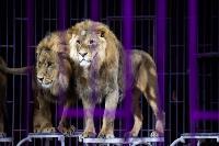 Шоу фонтанов «13 месяцев»: успей увидеть уникальную программу в Тульском цирке, Фото: 218
