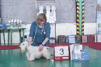 Выставка собак в Туле 26.01, Фото: 71