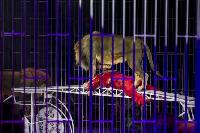 Шоу фонтанов «13 месяцев» в Тульском цирке – подарите себе и близким путевку в сказку!, Фото: 67
