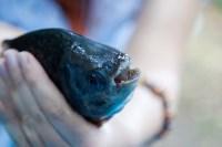 """Рыбка с """"человеческими"""" зубами в тульском экзотариуме, Фото: 4"""