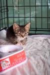 В тульском «Макси» прошел благотворительный фестиваль помощи животным, Фото: 36