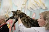 Выставка кошек в Туле, Фото: 53