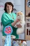 """Выставка """"Пряничные кошки"""" в ТРЦ """"Макси"""", Фото: 103"""