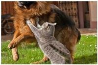 Дружба животных, Фото: 8