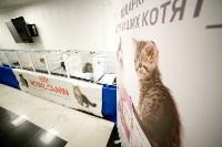Выставка кошек. 4 и 5 апреля 2015 года в ГКЗ., Фото: 99