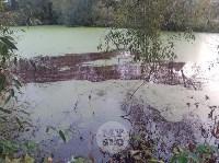 """""""Кровавая"""" вода в пруду в Михалково, Фото: 5"""