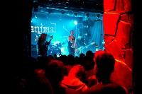 Animal ДжаZ, Фото: 26