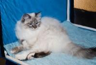 Выставка кошек в Искре, Фото: 20
