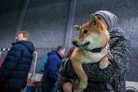 Выставка собак в Туле, Фото: 86