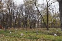 Высадка деревьев в Рогожинском парке, Фото: 16