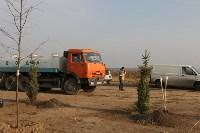 Возле мемориала «Защитникам неба Отечества» высадили еловую аллею , Фото: 2