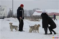 Куликово поле. Гонки на собачьих упряжках., Фото: 107