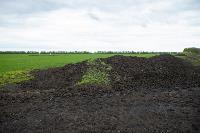 В Тульской области Богородицкий район атаковали мошки, Фото: 15