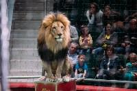 Львы Африки приехали в Тулу, Фото: 112