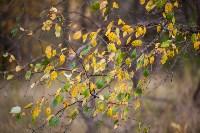 Золотая осень в Тульской области, Фото: 21