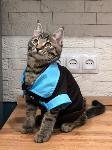Тульские коты, которых достали хозяева на самоизоляции, Фото: 19