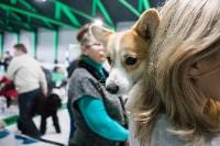 Выставка собак в Туле, Фото: 81