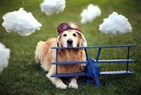 Самая счастливая собака в мире!, Фото: 2